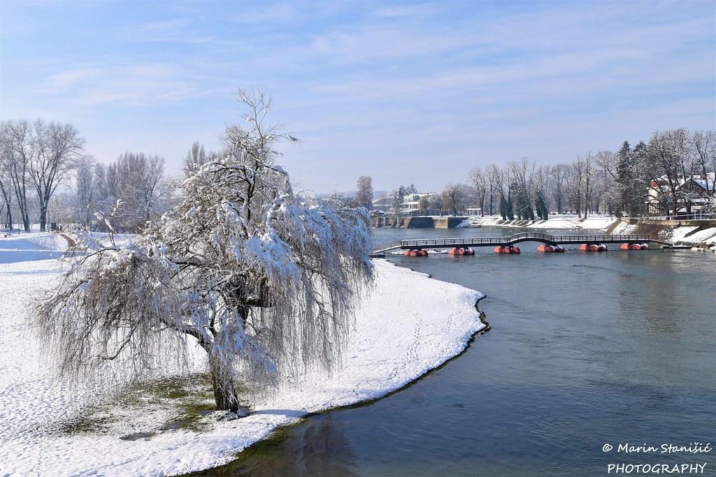 Willow tree under the snow this sunny morning... - Karlovac, Croatia