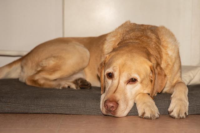 I love those heart-melting faithful dog eyes.