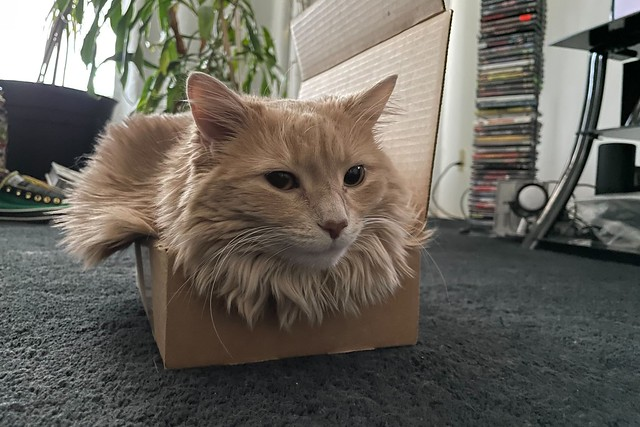 Wawa's Small Box [explore 02-04-21]