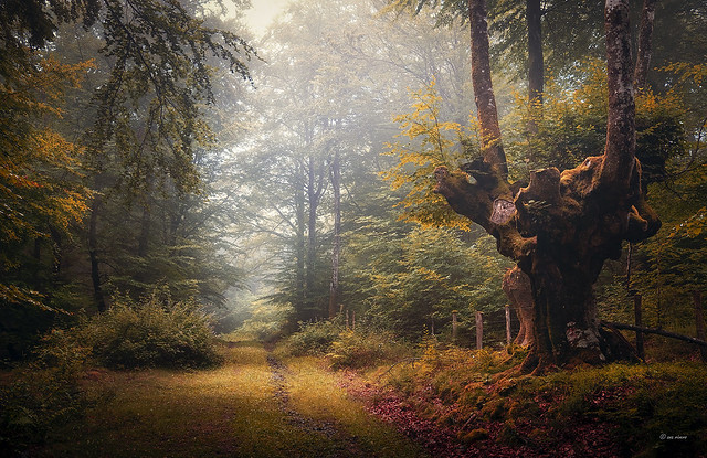 SYMPHONY OF THE FOREST...