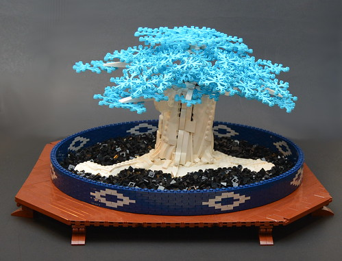 Blue Japanese Maple Bonsai