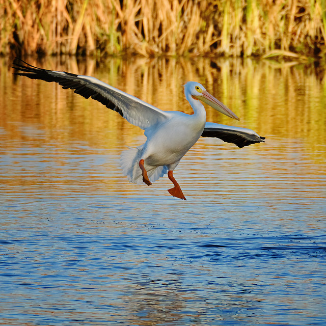 Landing at Las Gallinas ponds