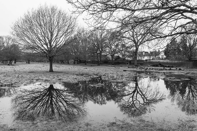 Grey day puddles