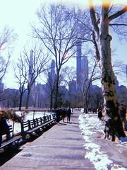 Snowy Central Park