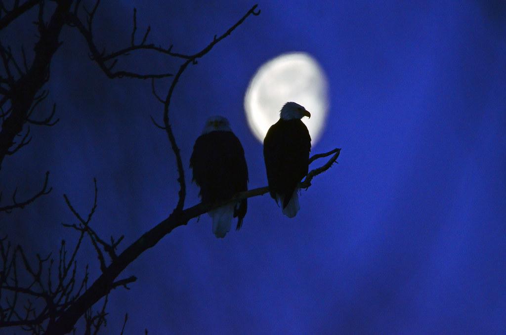 Eagles & Moon