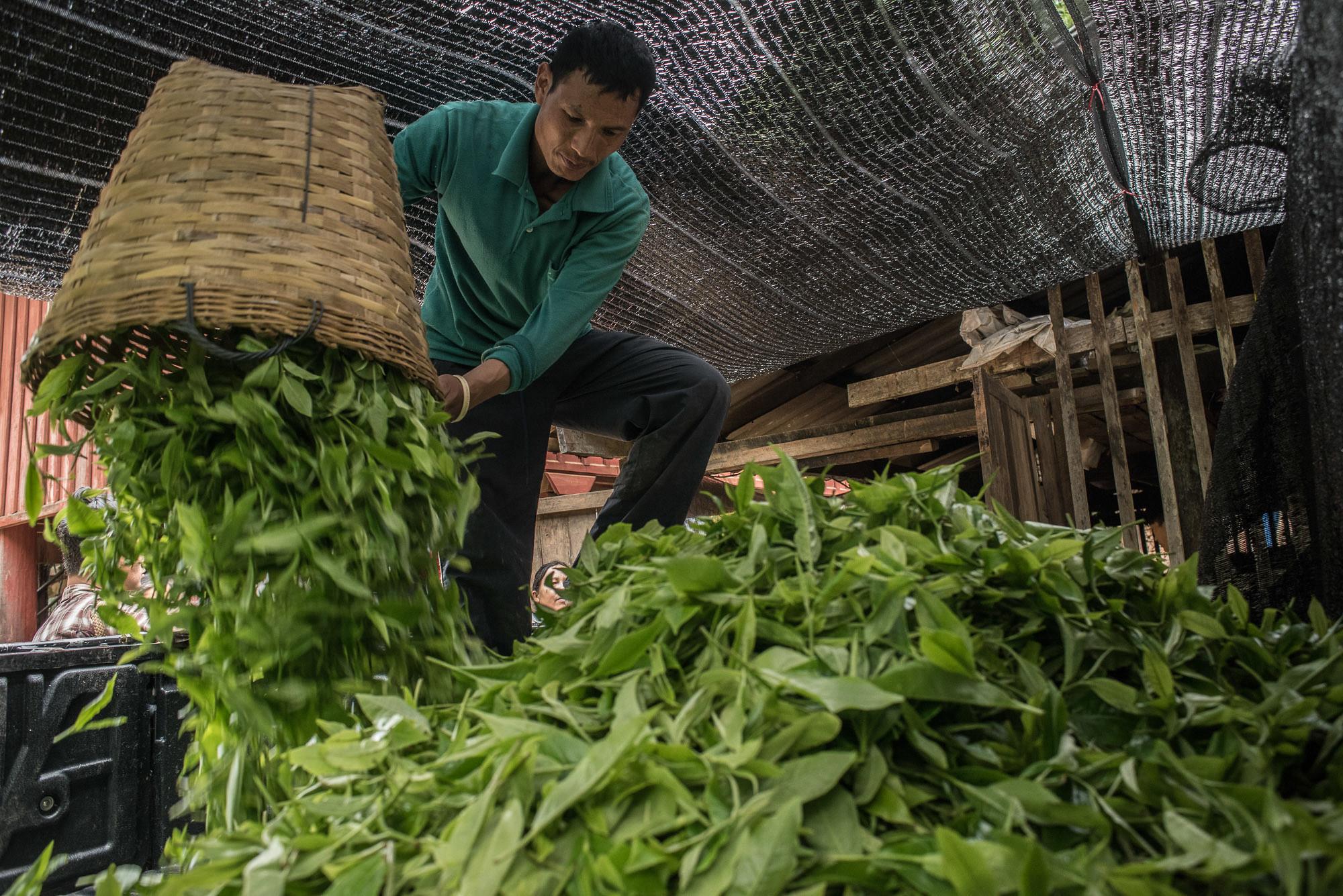 ชาวบ้านหินลาดใน นำใบชาที่ปลูกในหมูบ้านมาขายให้กำพ่อค้าคนกลางที่เข้ามารับซื้อในหมู่บ้าน ทั้งนี้รายได้จากการขายผลผลิตท้องถิ่นส่วนหนึ่งจะถูกนำไปใช้ในกองทุนดับไฟป่าของชุมชน (ที่มา: ยศธร ไตรยศ)