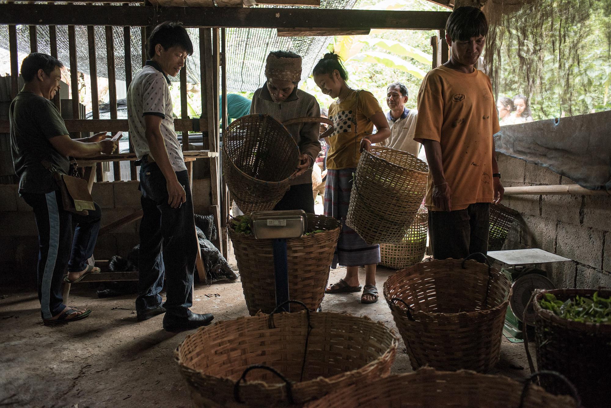 ชาวบ้านหินลาดในเข้าแถวนำใบชาที่ปลูกในหมูบ้านมาขายให้กำพ่อค้าคนกลางที่เข้ามารับซื้อในหมู่บ้าน ทั้งนี้รายได้จากการขายผลผลิตท้องถิ่นส่วนหนึ่งจะถูกนำไปใช้ในกองทุนดับไฟป่าของชุมชน (ที่มา: ยศธร ไตรยศ)