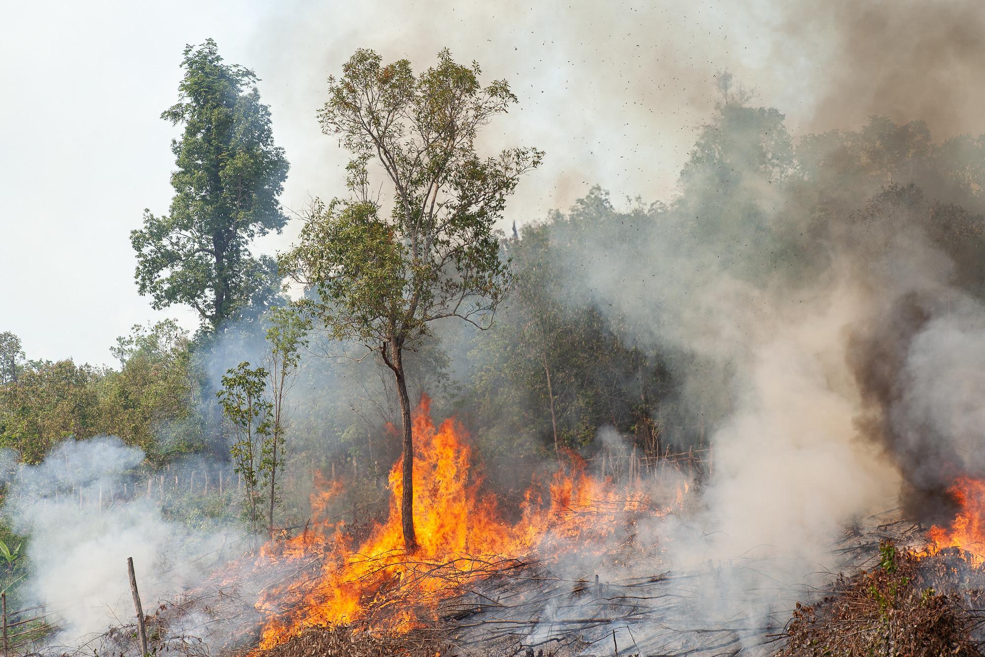 การเผาไร่ของชาวบ้านป่าคาใน ต.สะเมิงใต้ อ.สะเมิง จ.เชียงใหม่ ภาพถ่ายเมื่อ 6 พ.ค. 63 (ที่มา: ณัฐชานันท์ กล้าหาญ)