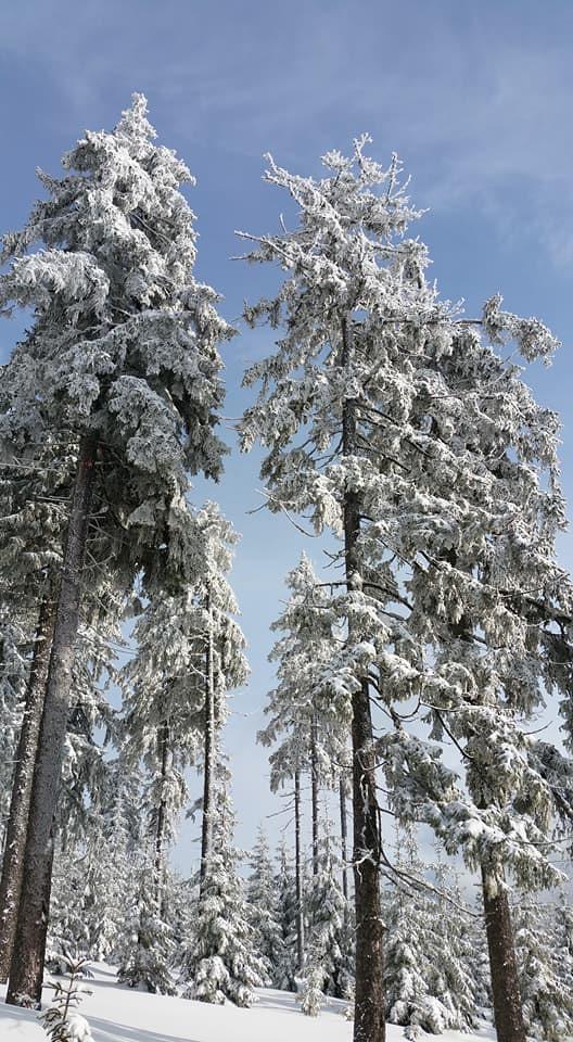 Vrchol Sněžka