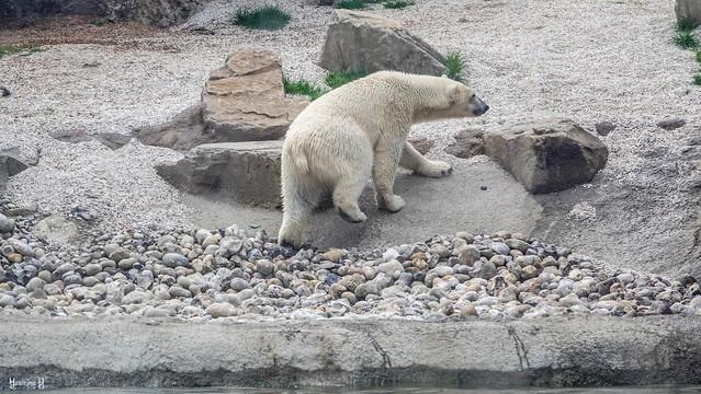 Bear - 9374