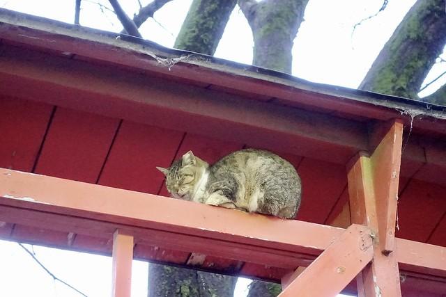 Today's Cat@2021−02−02