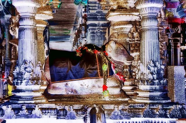 India - Tamil Nadu - Madurai - Meenakshi Amman Temple - Nandi - 127bb