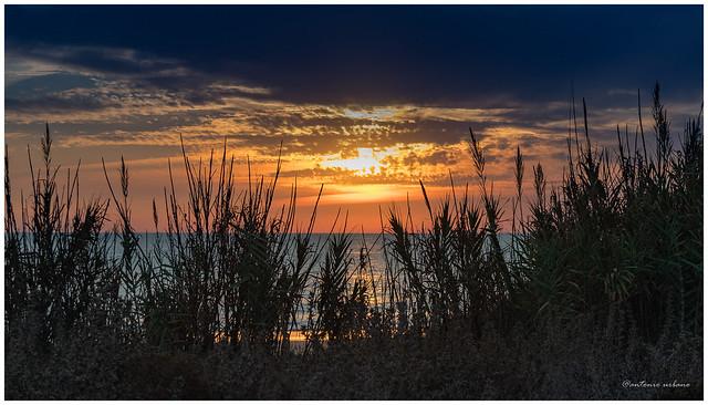 Detrás de las cañas contemplado el horizonte // Behind the reeds contemplated the horizon