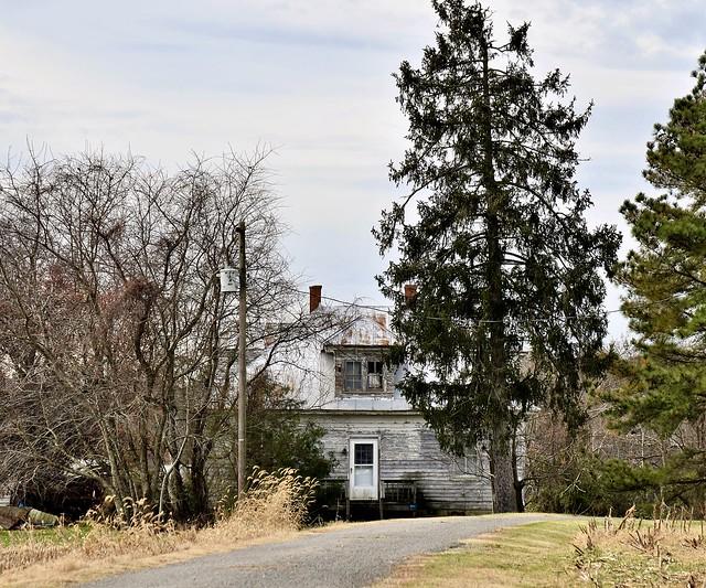 Tree, Pole, House