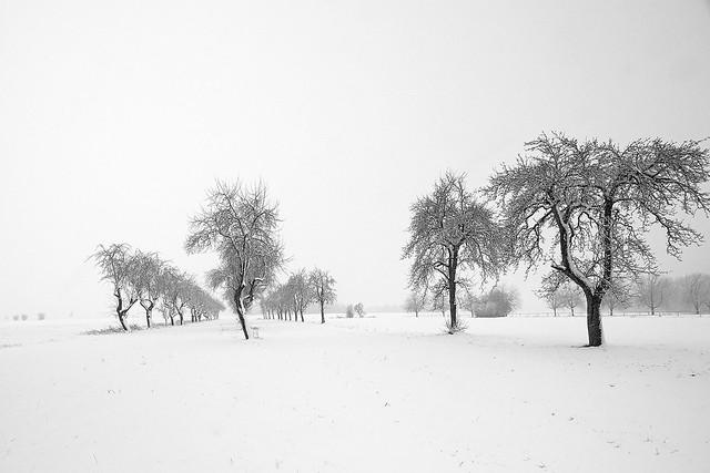 deep winter lowlands