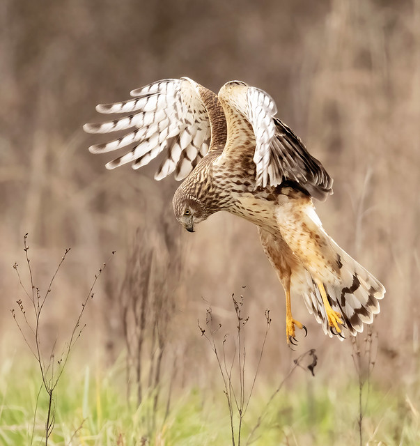 2021 Outdoor Alabama Photo Contest