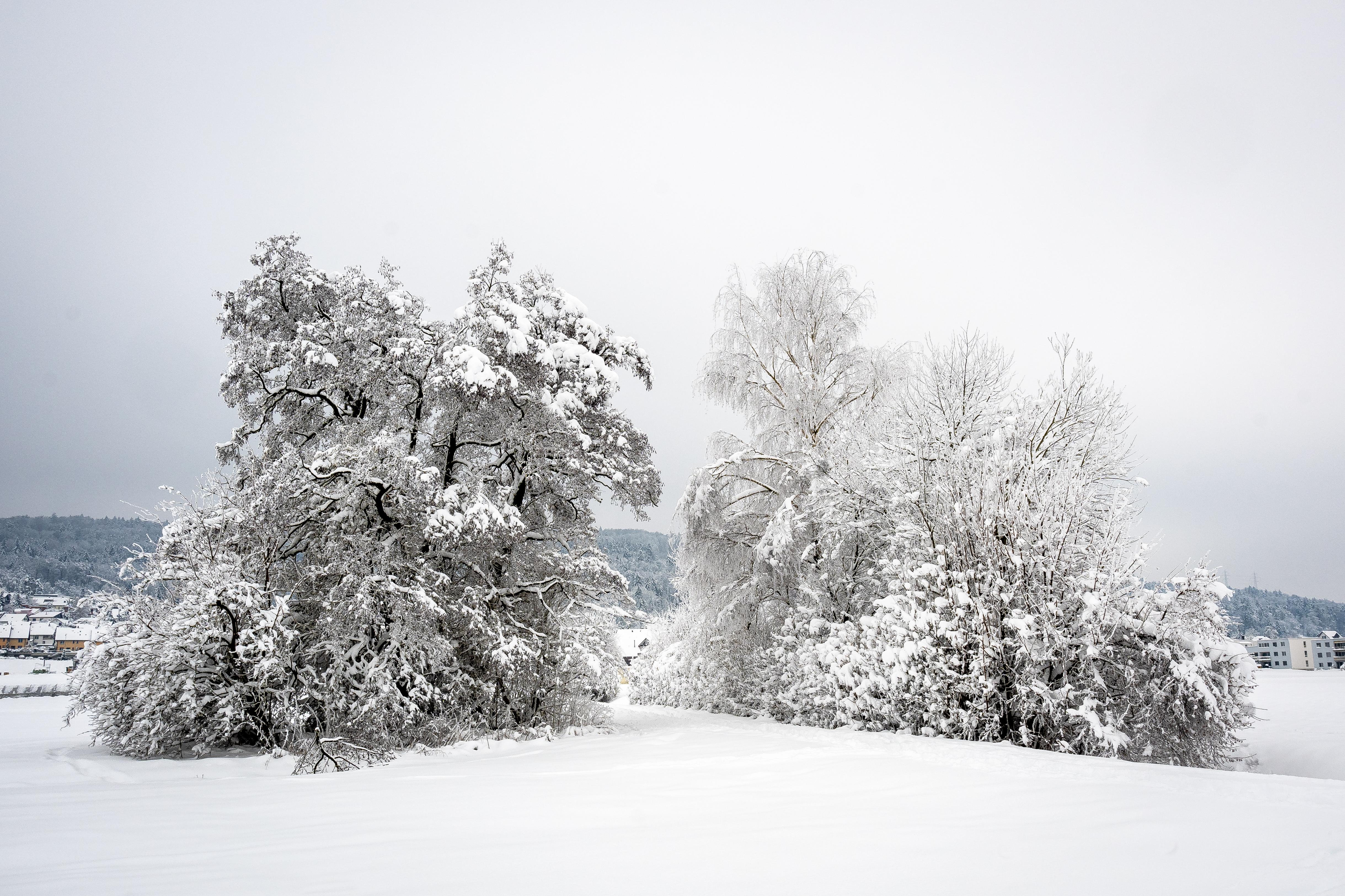 GPO im Winter 2021