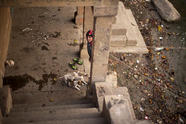 boy with puppies, Varanasi
