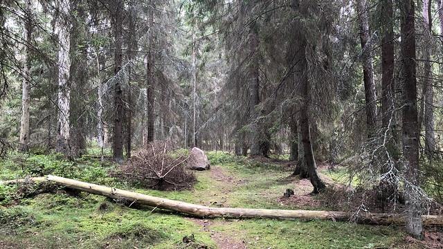Reveludden Woods