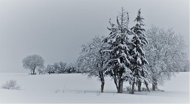 La saison du blanc