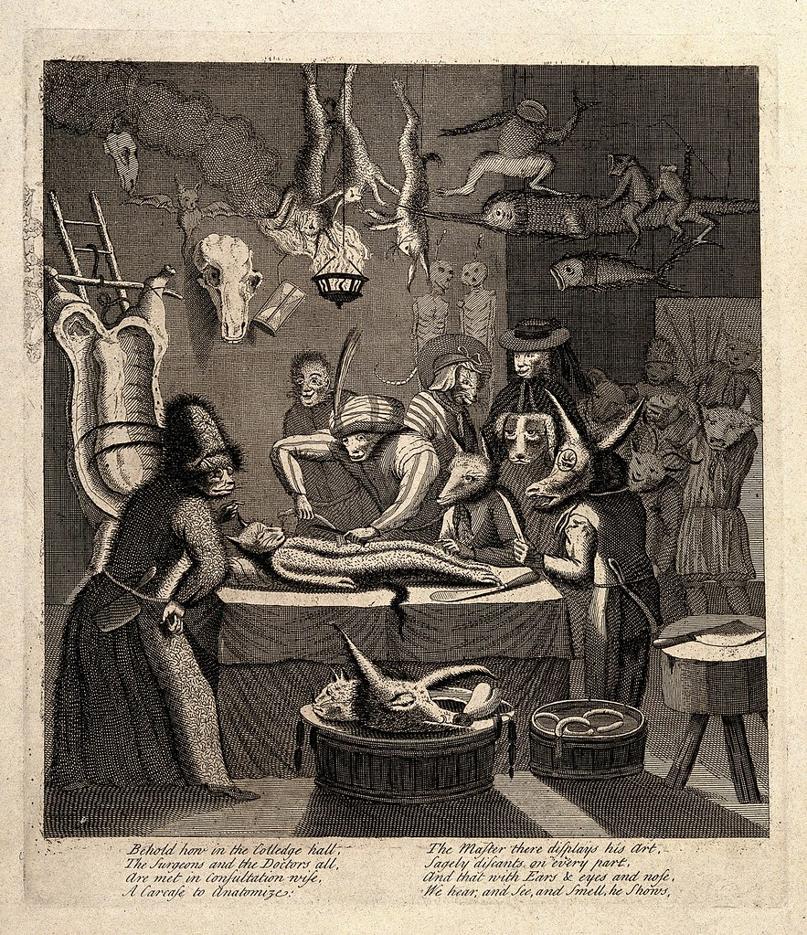 Egbert von Heemskerck - An anatomy lesson in an apothecary shop,Engraving by Toms after E. Heemskerck, 1730