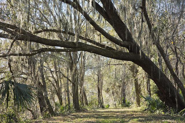 Emeralda Marsh Conservation Area, FL