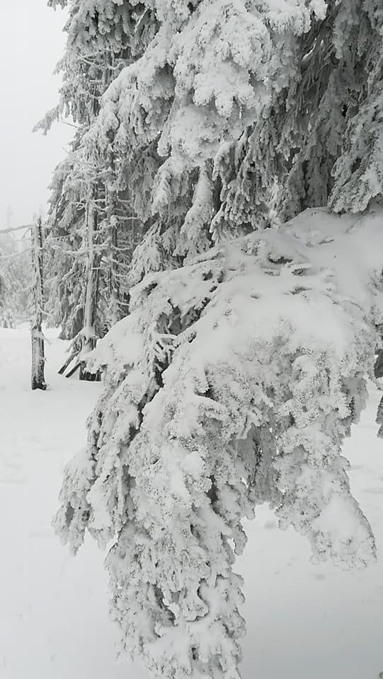 Karkonosze / Krkonoše, Pec pod Sněžkou, okres Trutnov, Královéhradecký kraj, Severovýchod, 542 21, Česko