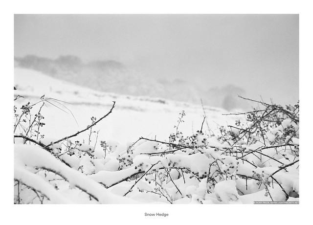 Snow Hedge
