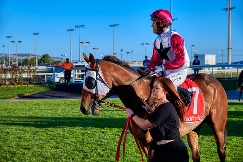 luminosity7 nikond850 launceston tasmania australia mowbrayracecourse eyesontheprize horse horseracing colour light sunsetlight mountingyard turkishjockey