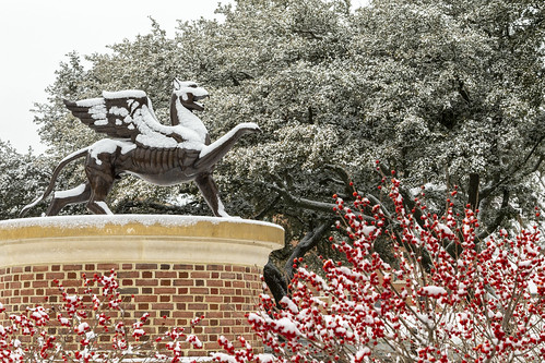 Scenes from a snow day: the mighty mascot Griffin