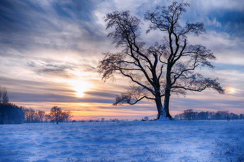 fischerhuderwümmeniederung baum tree winter schnee snow landschaft landscape himmel sky sonnenuntergang sunset sonya7iii ilce7iii halo