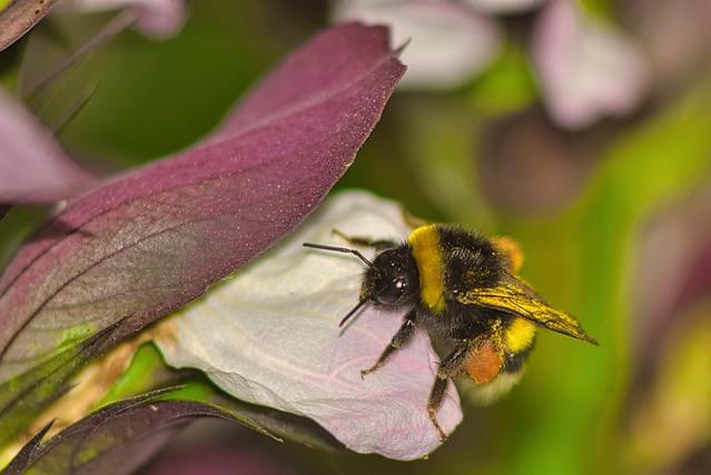 03/02.- Bumblebee