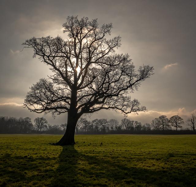 afternoon oak