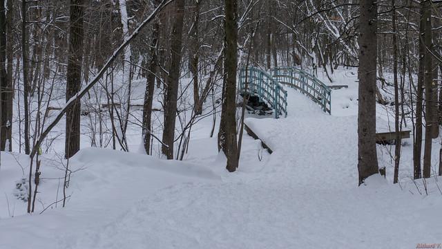 Sentier, trail, Parc de l'Escarpement, Québec, Canada - 6145