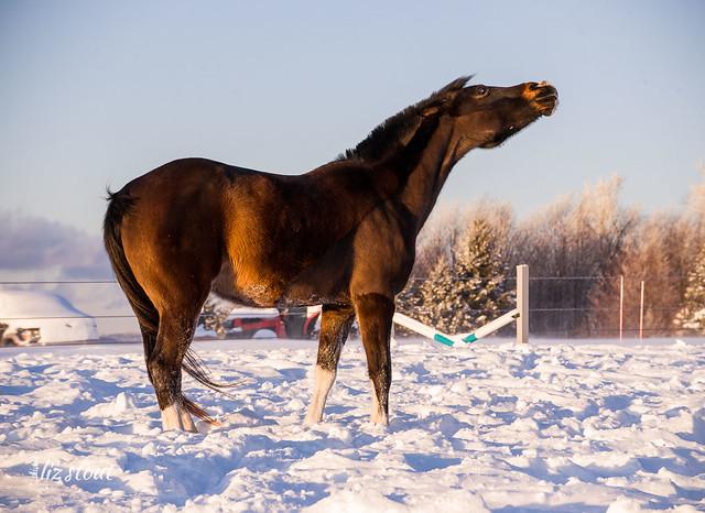 20210203 Horses in Big Snow_338