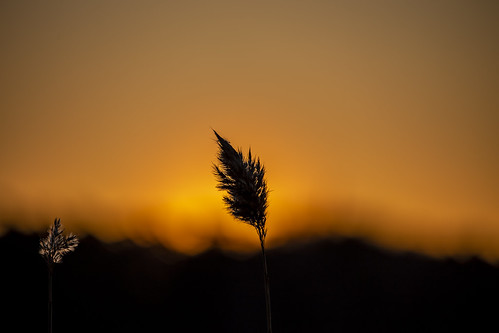 canon6d nature outdoors outside silhouette sunrise espoo finland
