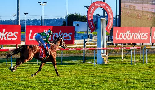 luminosity7 nikond850 launceston tasmania australia mowbrayracecourse horse horseracing thoroughbredhorseracing winningpost sunsetlight shootingintothesun swoopdog kylemaskielljockey
