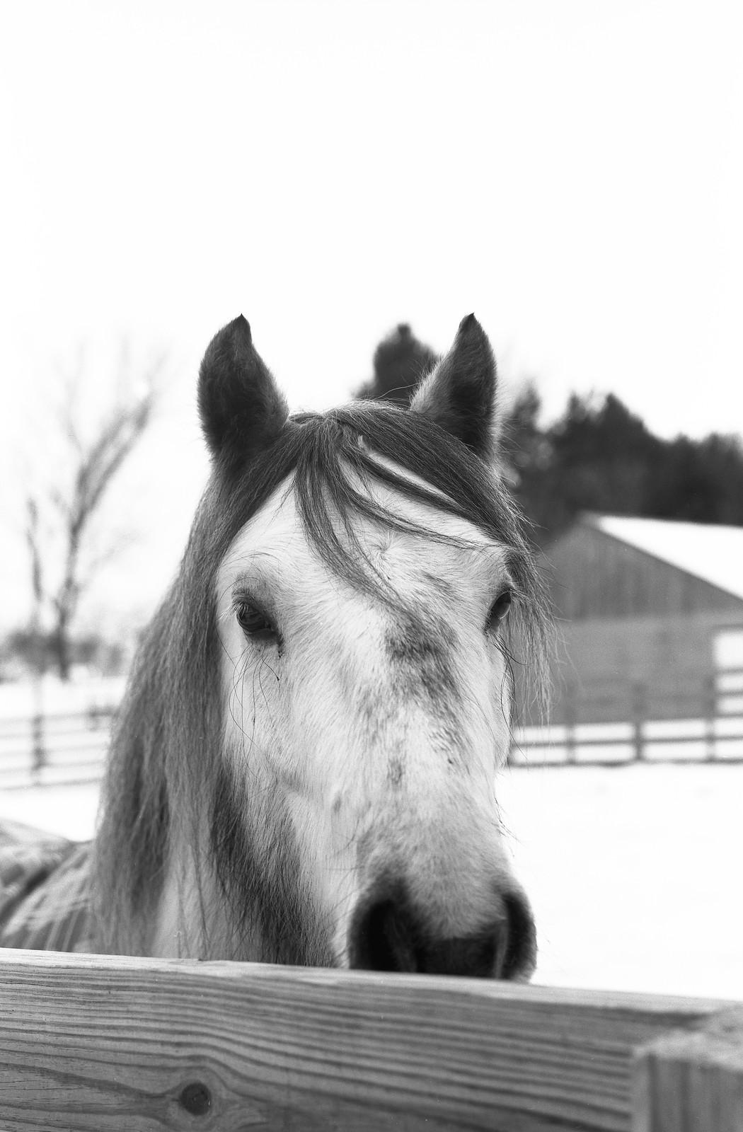 Vixen Hollow, Topcon Horseman 985, Ilford Delta 100