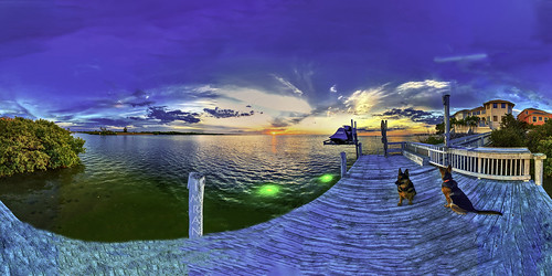 360x360 apollobeach clouds dusk florida germanshepherddogs imran imrananwar jetski lifestyle panorama sunset tampabay water animals beachfront boardwalk dock dogs equirectangular gratitude homesweethome iphone iphone11promax luxuryhomes maghreb puppy seaside
