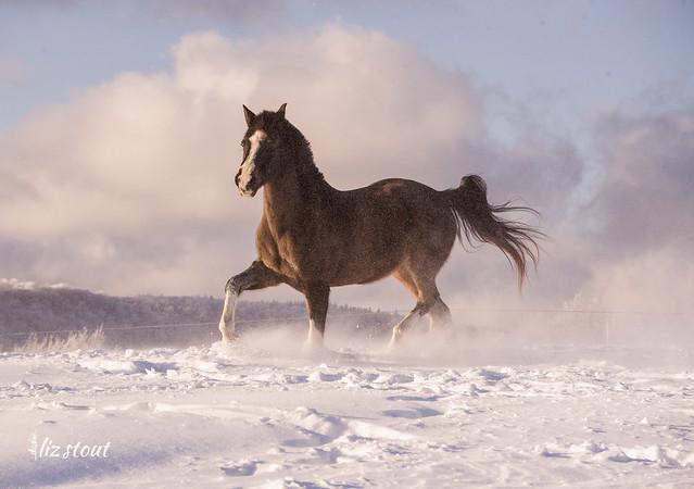 20210203 Horses in Big Snow_87