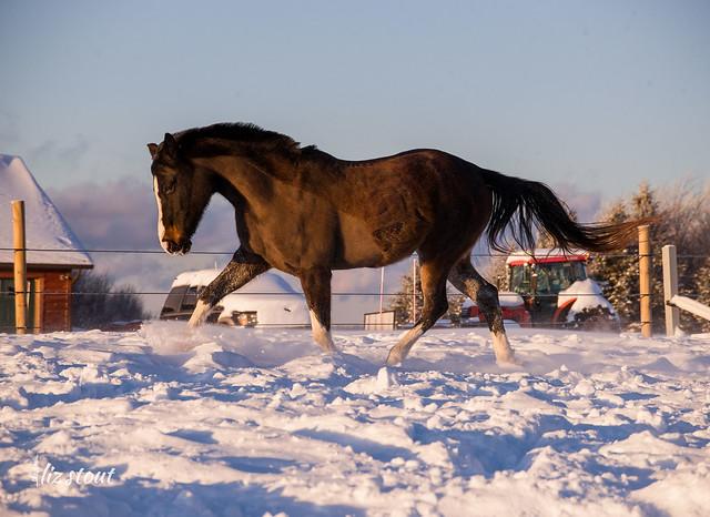 20210203 Horses in Big Snow_334