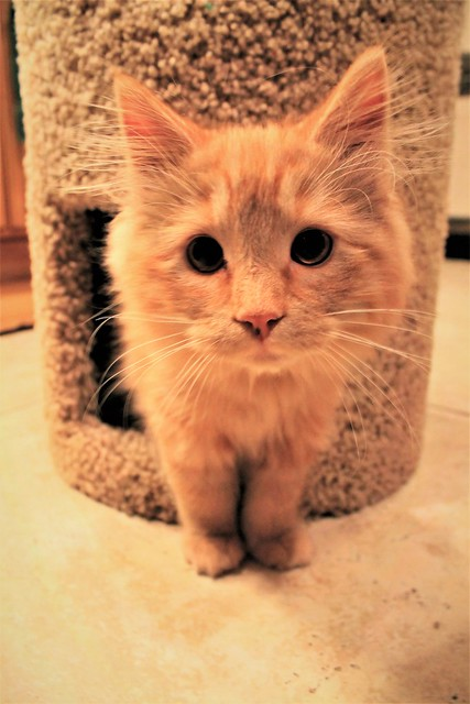 Kitten Camera Curiosity