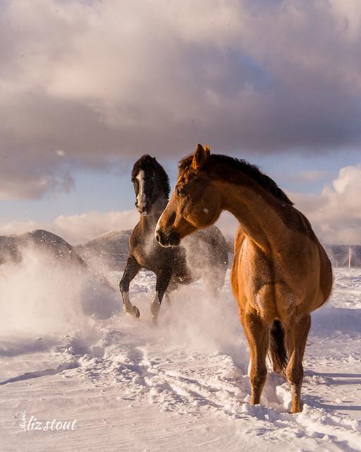 20210203 Horses in Big Snow_113
