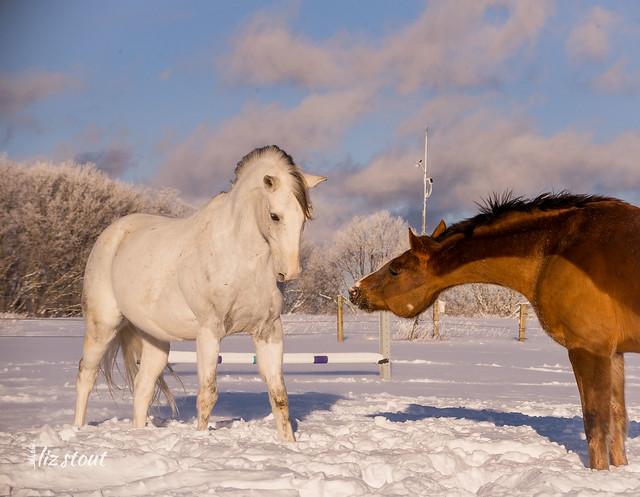 20210203 Horses in Big Snow_217
