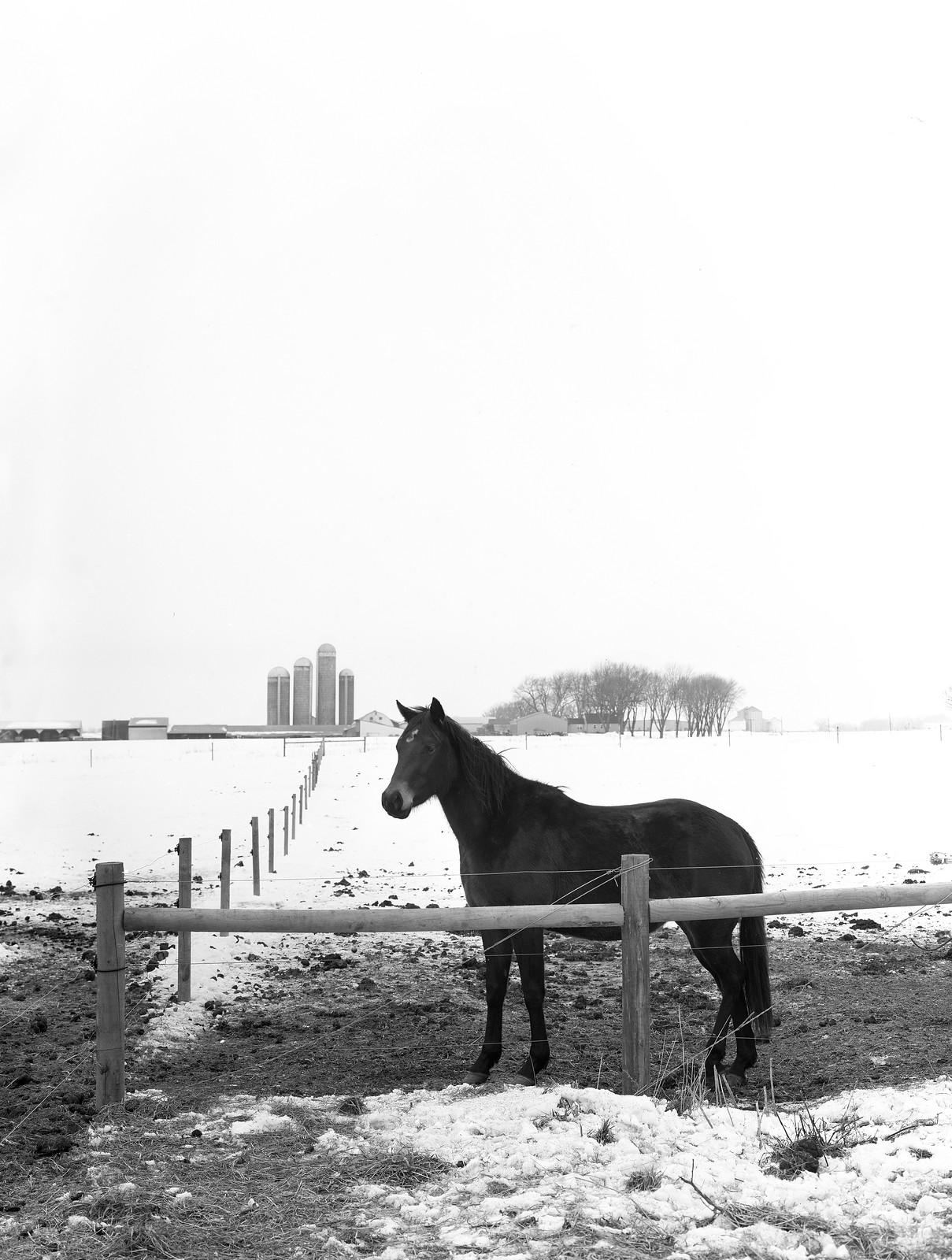 Vixen Hollow, Toyo 45A, Kodak Tmax 100