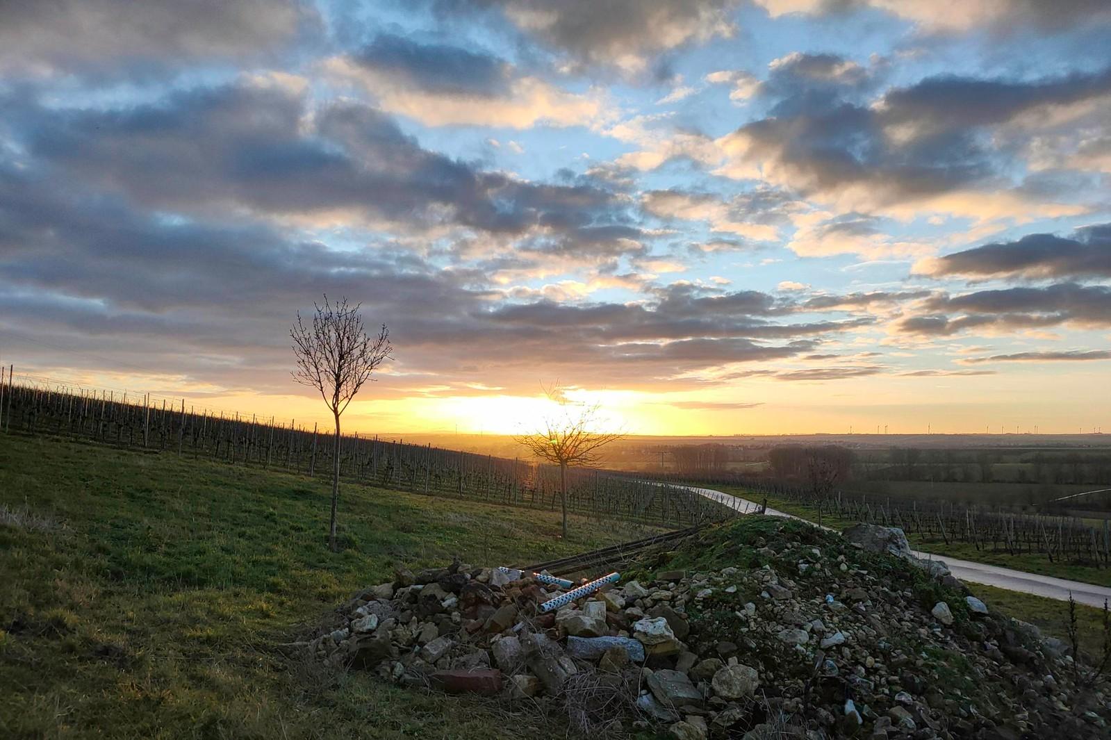 SunriseRun im Selztal mit Sonnenaufgang über dem Hahnheimer Bruch