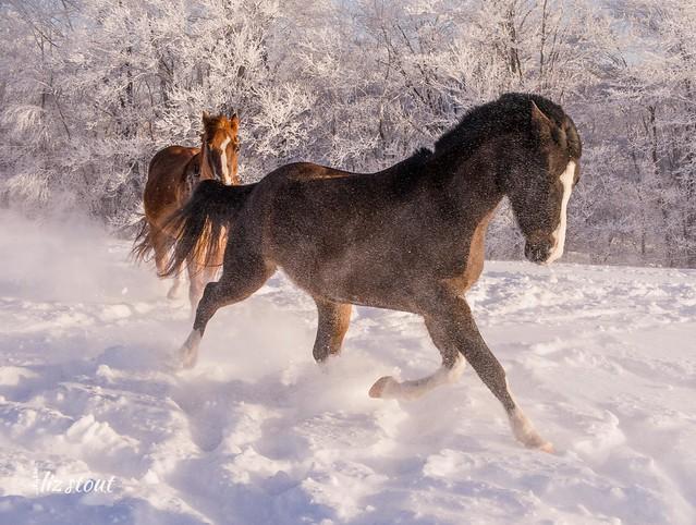 20210203 Horses in Big Snow_140