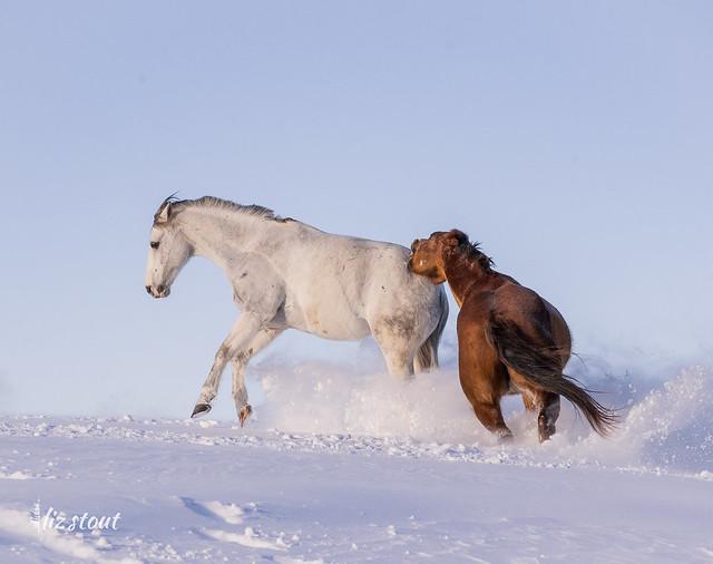 20210203 Horses in Big Snow_40