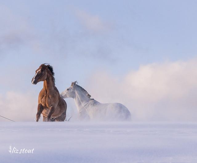 20210203 Horses in Big Snow_34