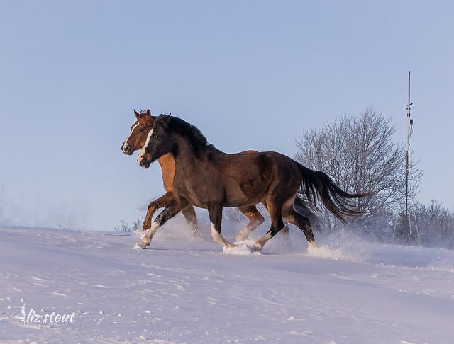 20210203 Horses in Big Snow_21